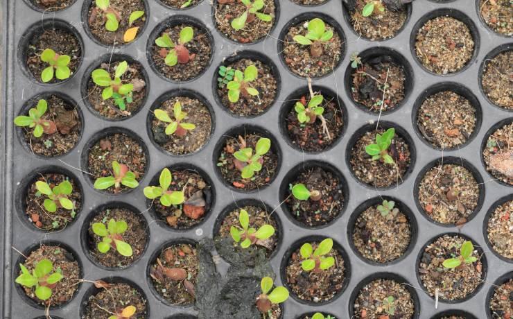 New Plant Varieties